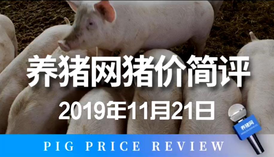 2019年11月21日猪价简评