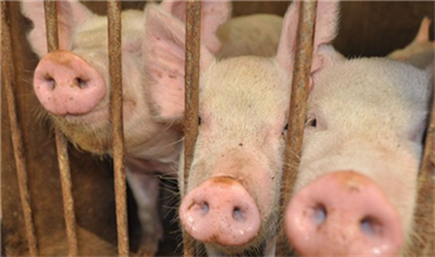 2020年03月25日最新生猪价格-多地反弹!
