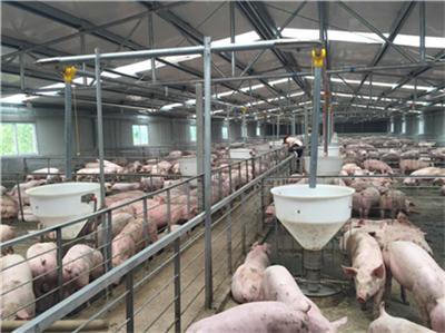 3月30日猪价跌——最新活猪价格报价(生猪价格、仔猪价格)