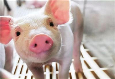 2020年03月31日猪价——最新生猪价格