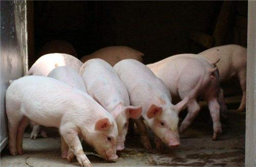 5月7日饲料:豆粕上涨22元,玉米稳中偏强运行!